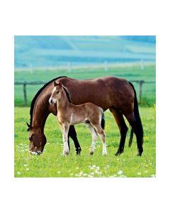 Салфетка (SN0469) 33x33, Pair of Horses