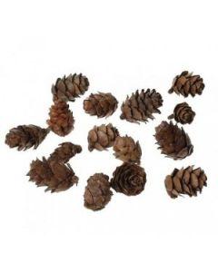 Декоративни малки шишарки - 1.5 - 3.5 см.- 20 бр